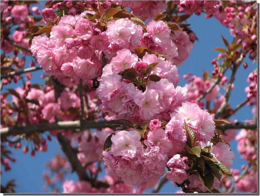 Finalmente Primavera