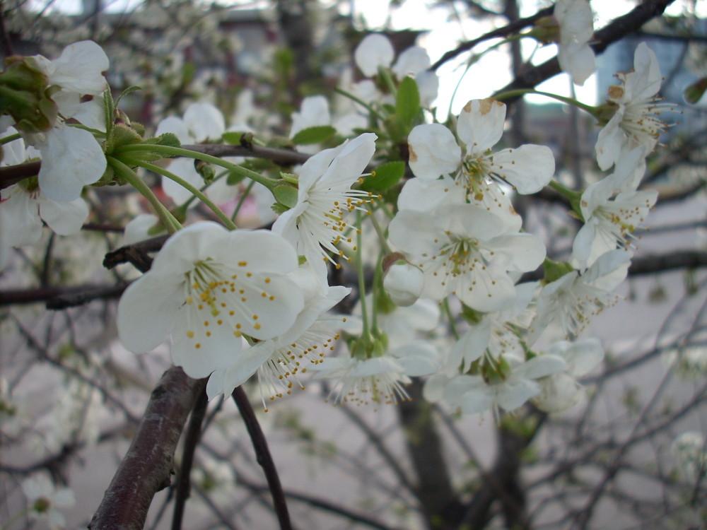 F!inalmente primavera!