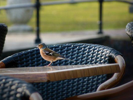 Finch often settled next to a man