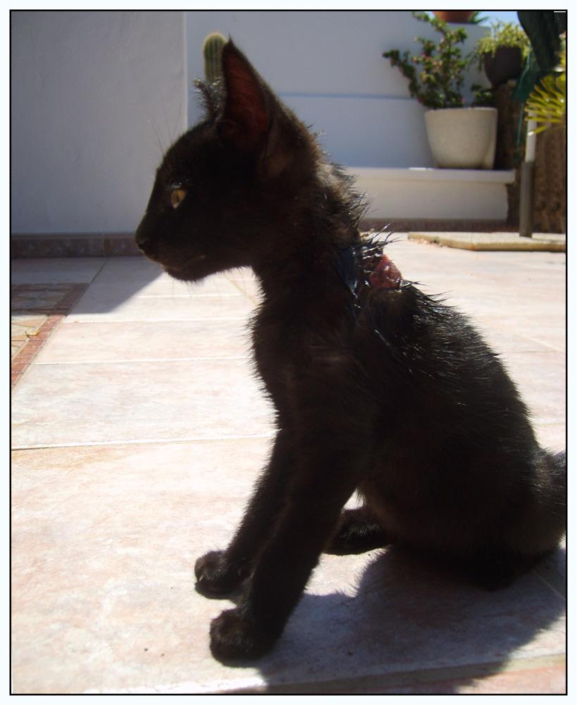 Findelkind aus Lanzarote