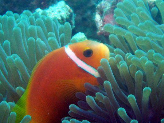 Findet Nemo :-)