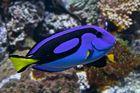 Findet_Nemo_1