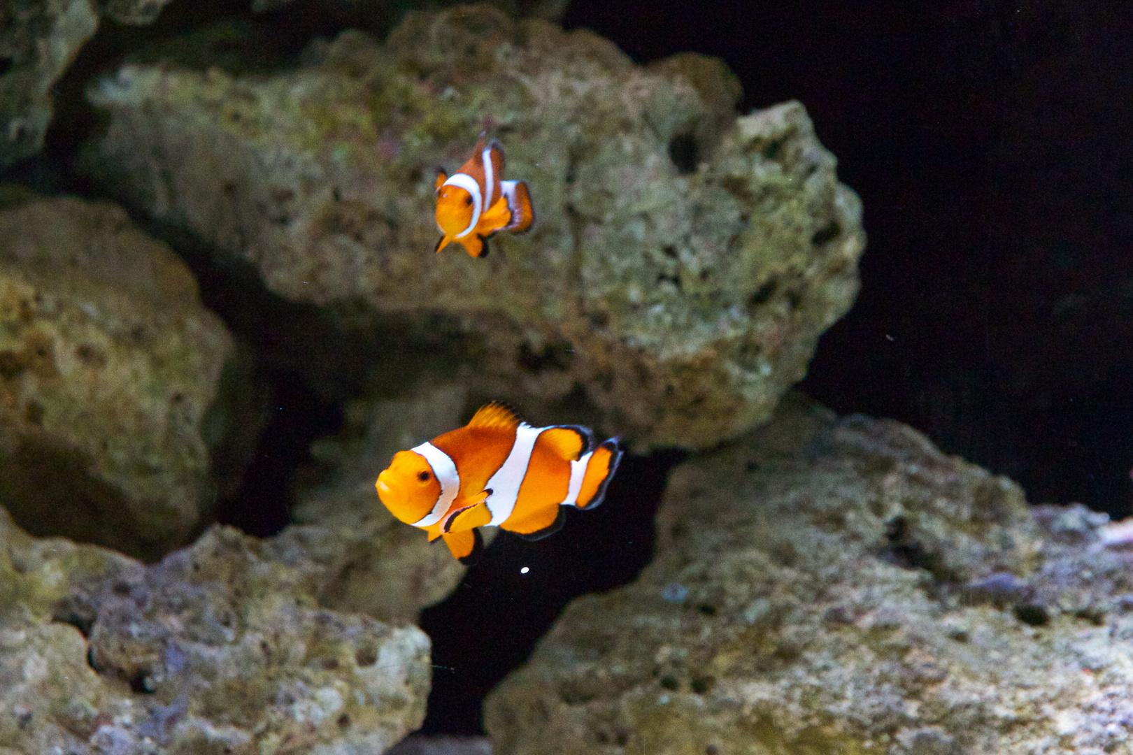 Findet_Nemo_3