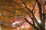 fine tree, gentle sunshine