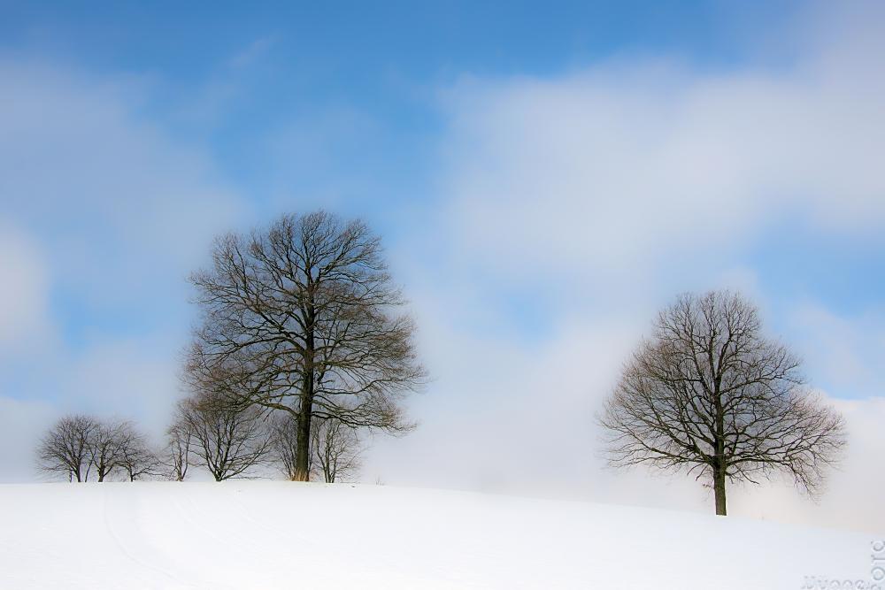FineArt Trees