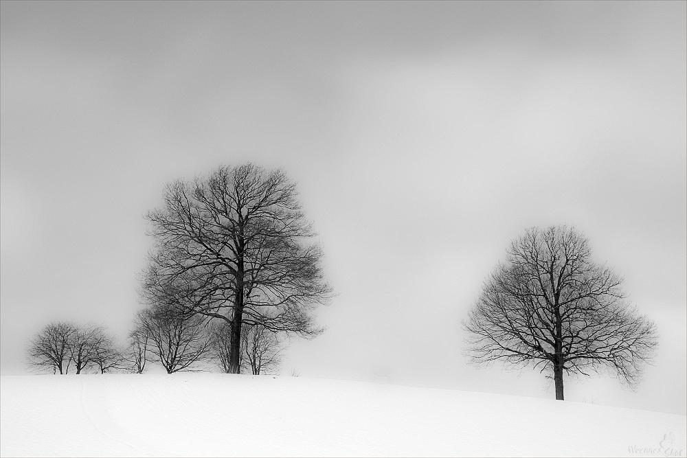 FineArts Trees