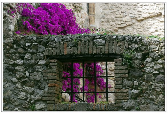 finestra su giardino....