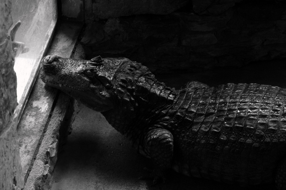 Fingerzeig mit Krokodil