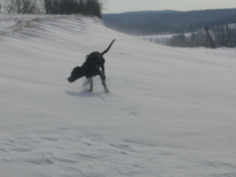 Finja im Schneesturm