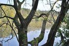 Finkenmoor Cuxhaven