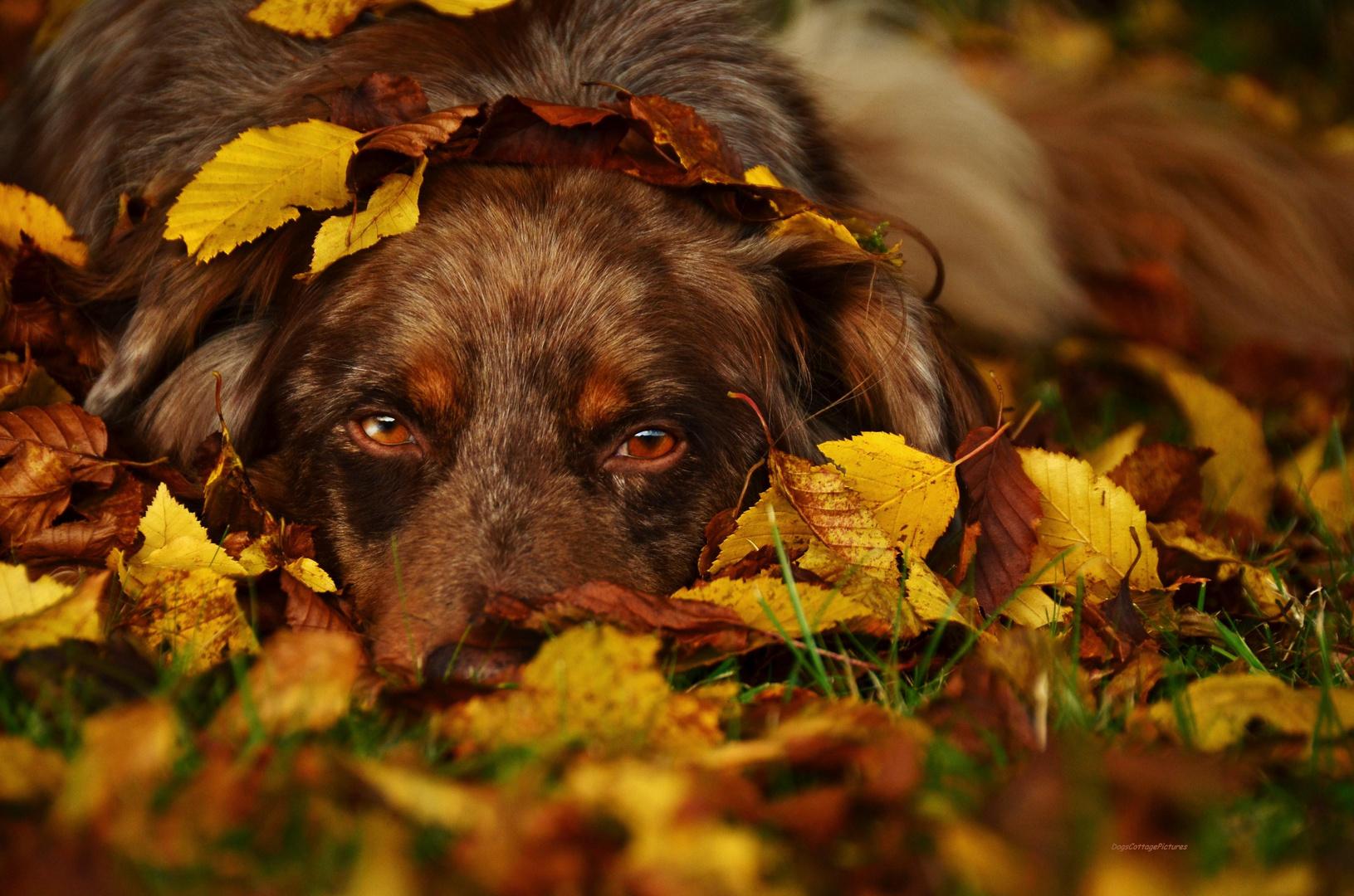 Finn Goldener Herbst