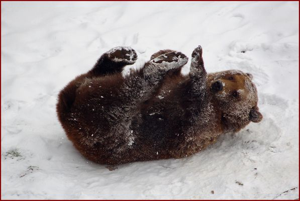 Finn im Schnee