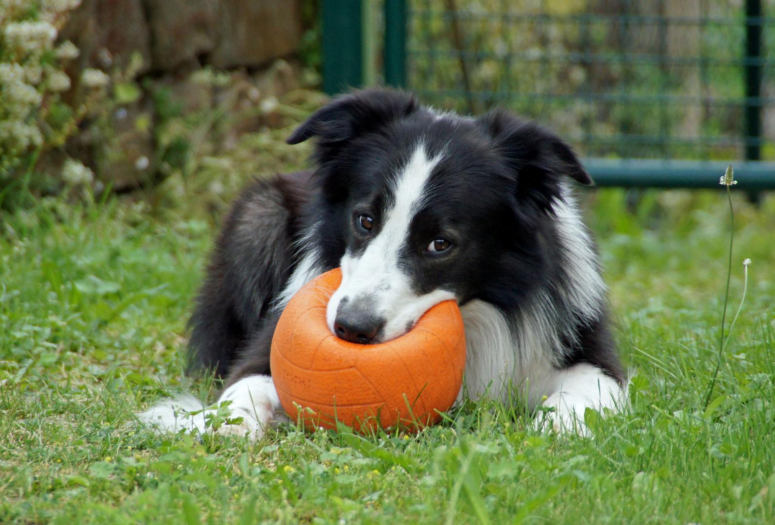 Finn und sein Ball...gut behütet