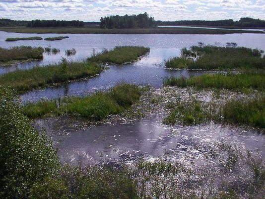 Finnischer Sumpf