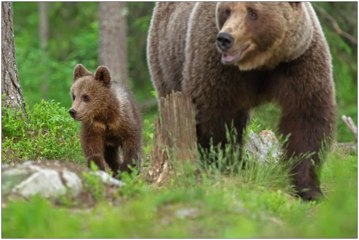 Finnland Bärenland [43] - Unterwegs mit Mama