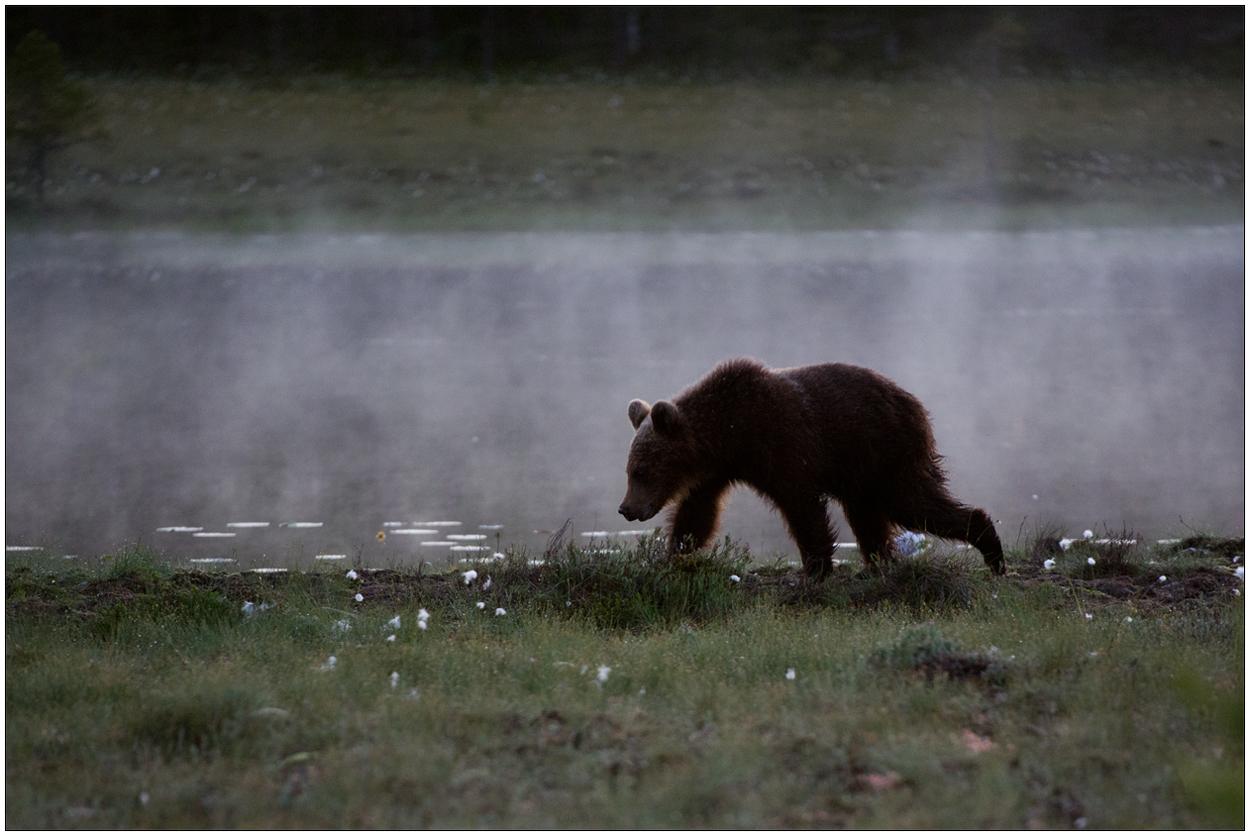 Finnland Bärenland [45] - Im Nebel