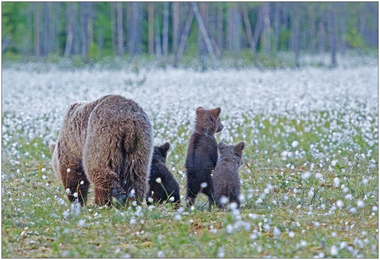 Finnland Bärenland [61] - Wiesenkindergarten