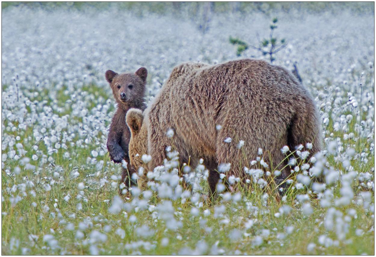 Finnland Bärenland [72] - Neugierig