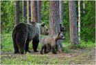 Finnland Bärenland [73] - Familienansichten