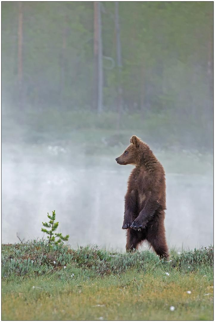Finnland Bärenland [87] - Ausguck
