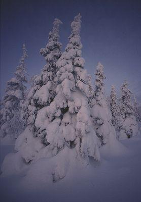 Finnlandwald