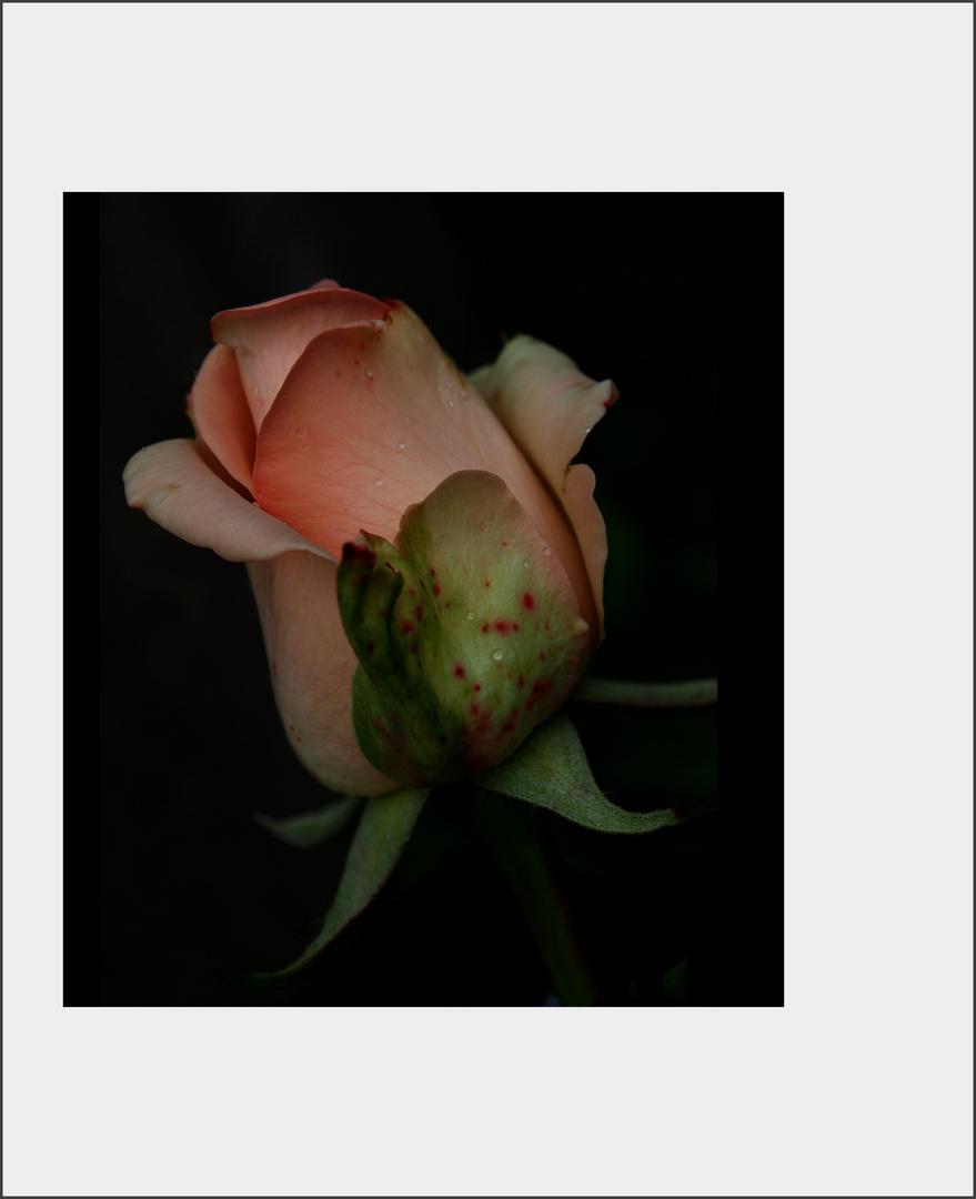 ..fiore...