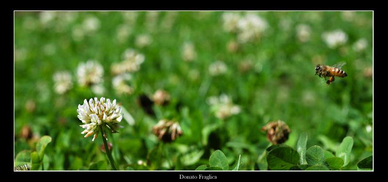 Fiore avvistato