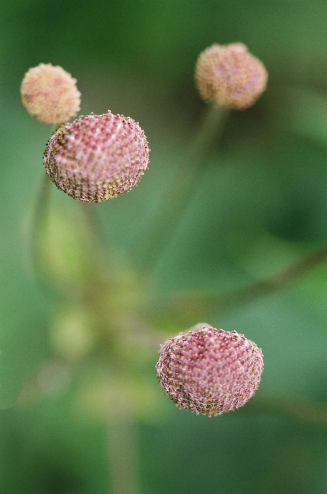 Fiore backyard vaenlose 1 (cph)
