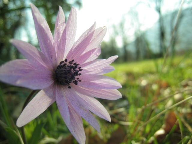 Fiore del Bosco