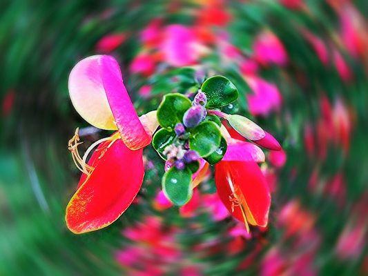 Fiore di ginestra. (Elaborazione)
