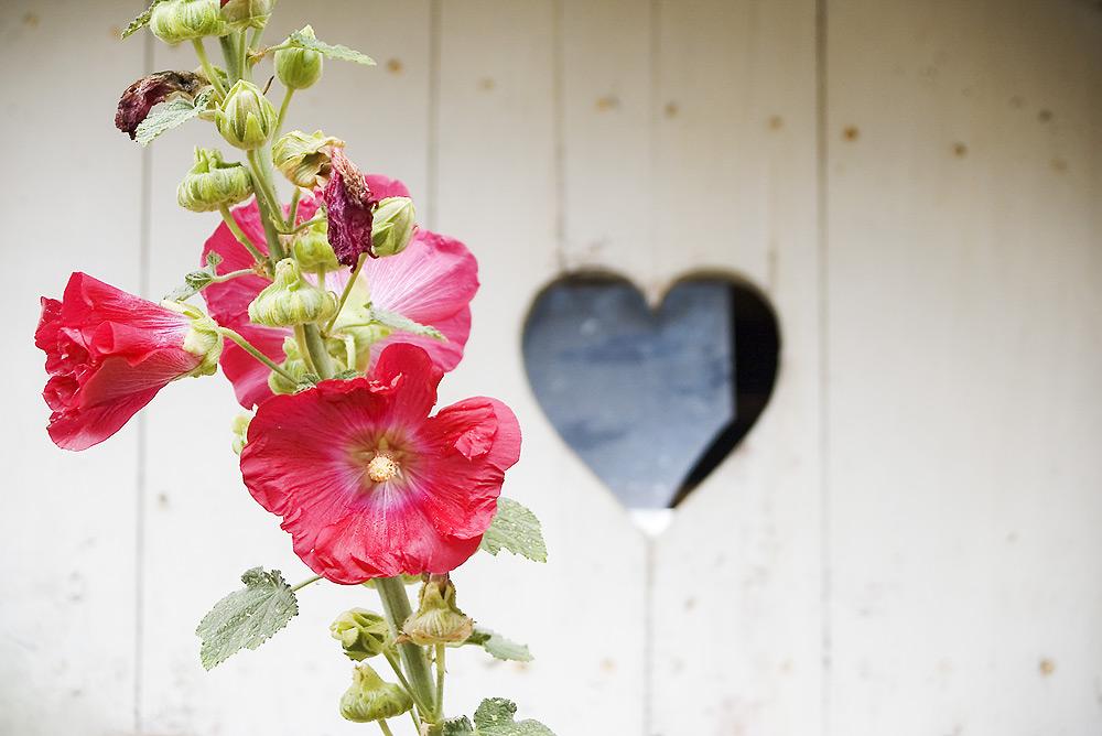 Fiore e cuore
