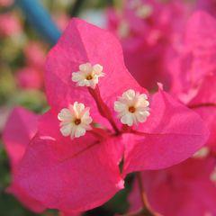 fiore in fiore