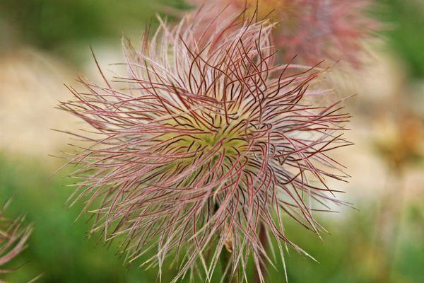 Fiore spettinato