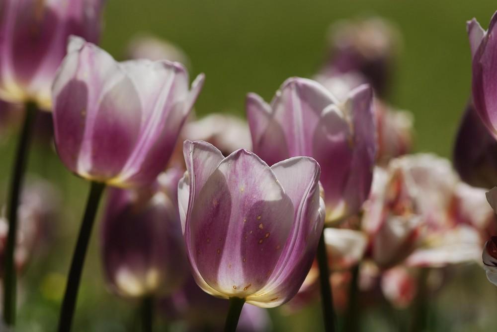 Fiore01