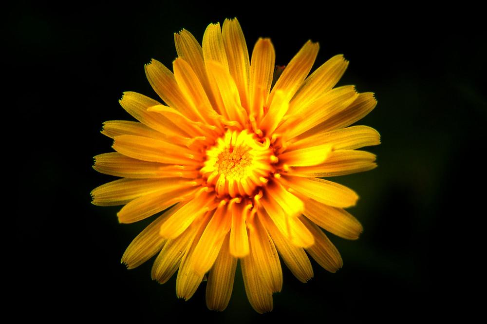 fiorellino.............