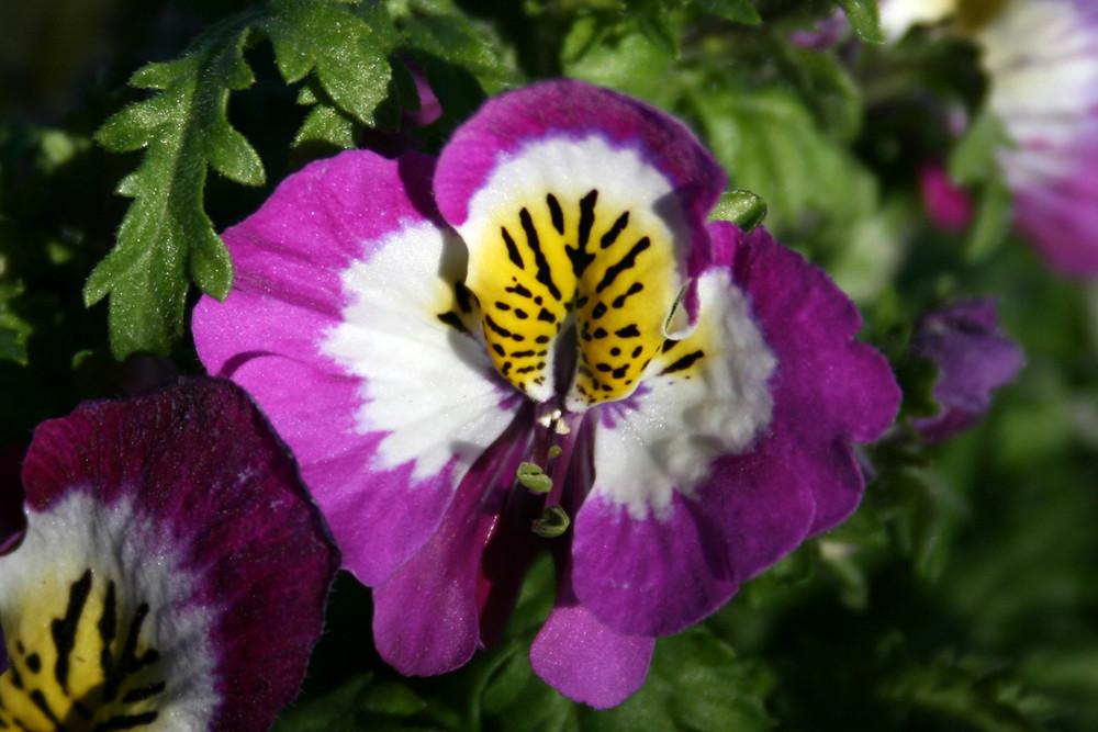 fiorellino non identificato
