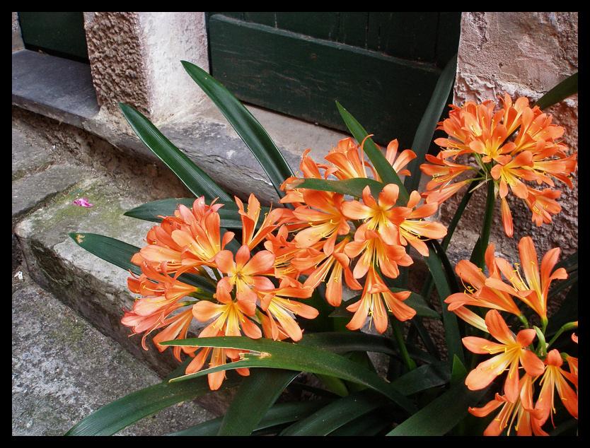 Fiori a Monterosso