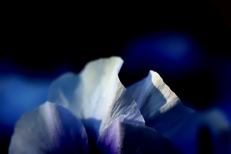 fiori colori *12*