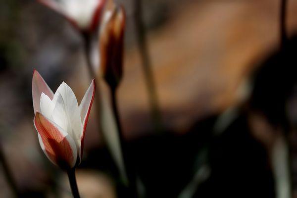 fiori colori *18*