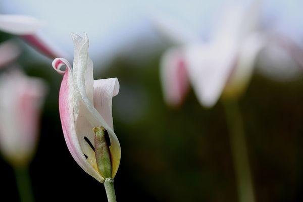 fiori colori *19*