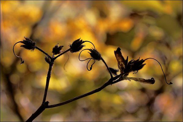 fiori colori *21*