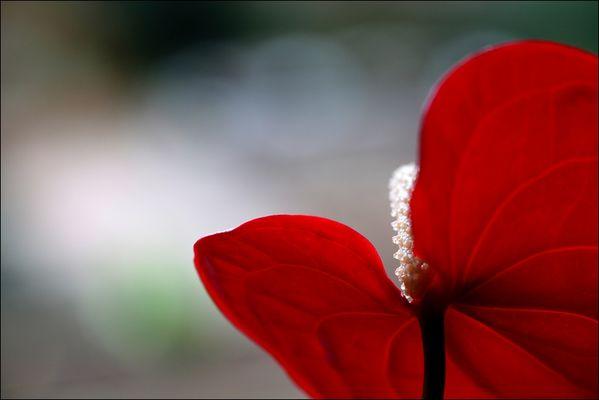 fiori colori *22*