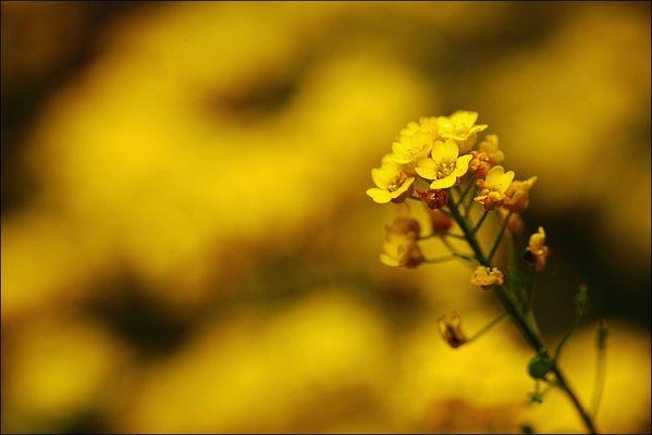 fiori colori *25*