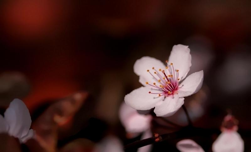 fiori colori *9*