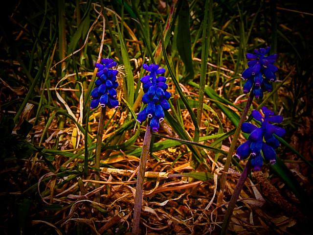 fiori di campo..