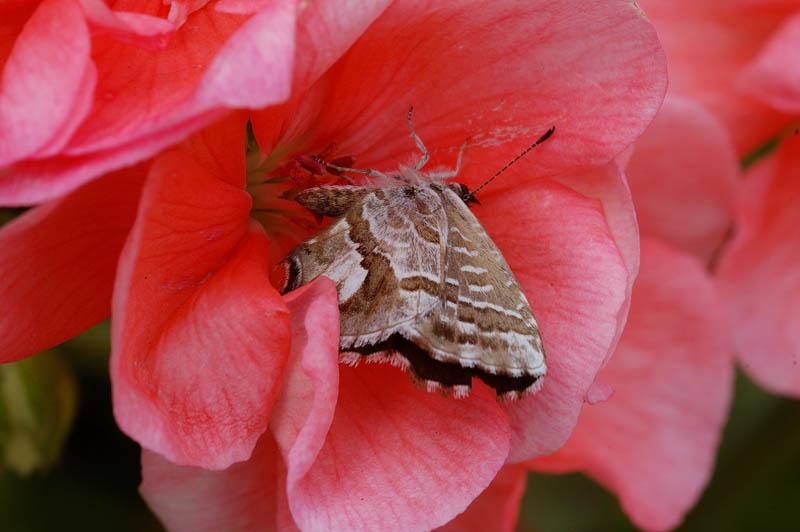 Fiori e farfalle.