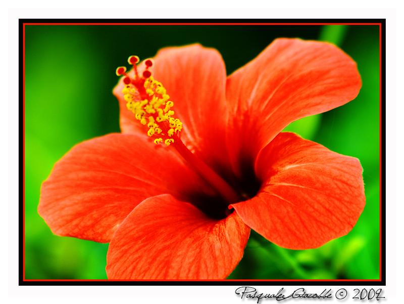 Fiori e piante di mille colori foto immagini piante for Piante e fiori