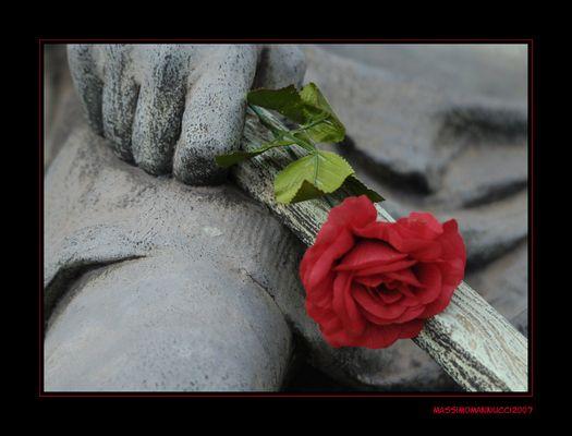 Fiori e pietre, colori e bianco e nero, vita e morte....