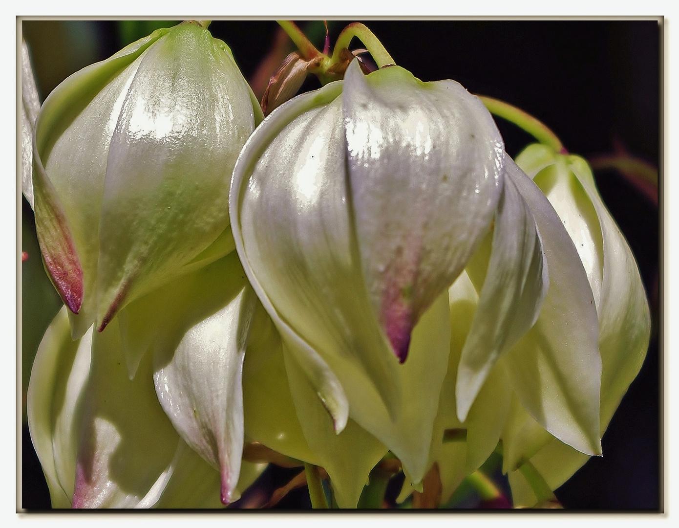 fiori esotici...