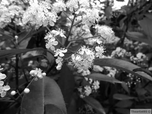 Fiori in bianco e nero